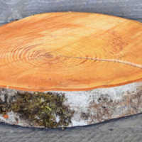 Red Alder Wood Slabs (Birch Slices) - Large Slices