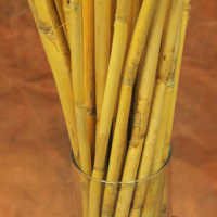 Short Dried Bamboo Sticks - Shoots