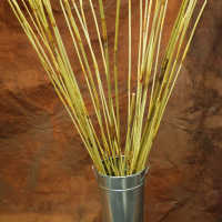 Decorative Elephant Reeds (Equisetum Like Reed)