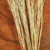 Natural Yangani Branches - Tall