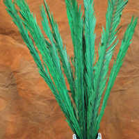 Dried Rahul Stick Green