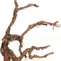 Grapewood Branches - Natural - Grape Wood
