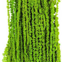 Hanging Amaranthus Preserved - Dried