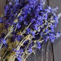 Dried Dark Blue Larkspur Flower For Sale