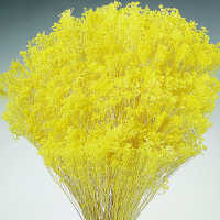 Dried Babys Breath Colors - Dried Gypsophila