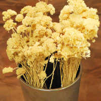 Dried Bleached Yarrow flower Bunches
