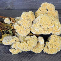 Dried Celosia Coxcomb Flowers - Cockscomb