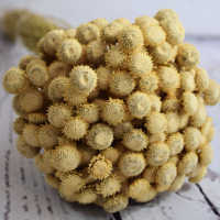 Dried Diamond Button Flowers