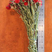 Dried Globe Amaranth - Red