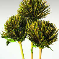Dried Papyrus Stemmed Flowers