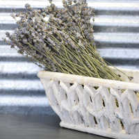 Dried English Lavender Bunch - Large Bundle - Royal Velvet