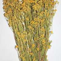 Dried Tansy Flowers