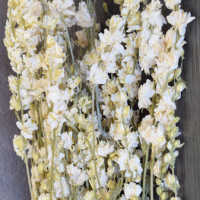 Dried White Larkspur Flowers For
