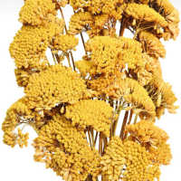 Dried Yarrow Bunches - Yellow