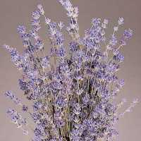Dried English Lavender Bunch - Royal Velvet