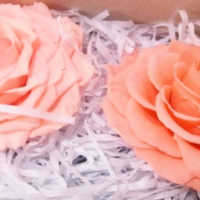 Preserved Roses - Extra Large - 2 per Order - Colors