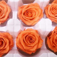 Preserved Roses - 8 per Order - Colors: Purple, Yellow, Orange