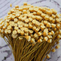 Dried Happy Flower - Straw Flowers