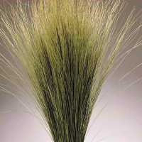 Dried Dune Grass - Natural