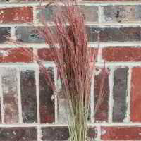 Dried Ruby Red Silk Grass