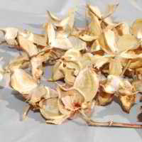 Decorative Cotton Petals (Pods, Brackets)