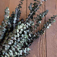Preserved Eucalyptus Branches for sale - Green- 1lb Bunch