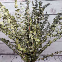 Preserved Eucalyptus Branches - Basil Green