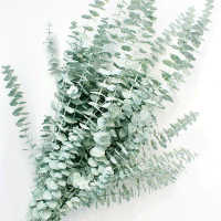 Preserved Eucalyptus Branches and Leaves - Pastel White