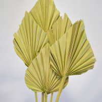 Dried Cut Spear Palm Fronds