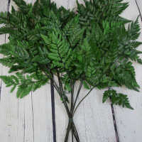 Decorative Leatherleaf (leather leaf)