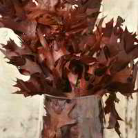 Preserved Chocolate Oak Leaves