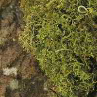Dried Sheet Moss - Bulk Box