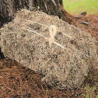 Dried Spanish Moss Bales - Natural