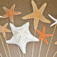 Dried Starfish Stemmed