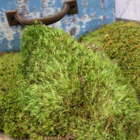 Mood Moss - Naturally Preserved