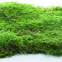 Dried Sheet Moss - Preserved Bulk Box
