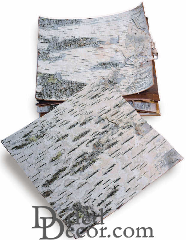 Dried Birch Bark Sheets - Cured & Natural - Click Image to Close