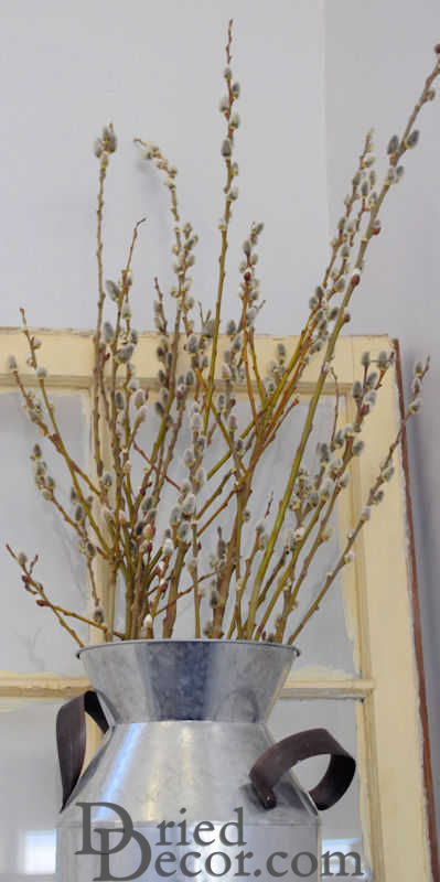 Fresh Pussy Willow Branches - Click Image to Close