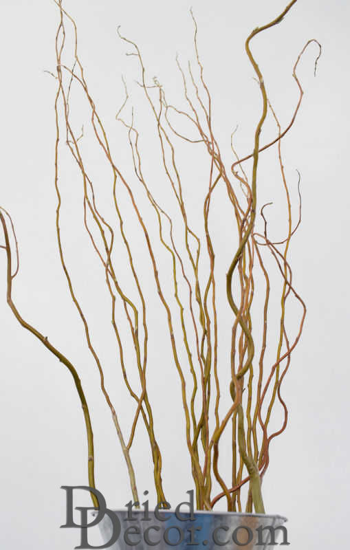 Fresh Curly Willow Branches Long Stem - Click Image to Close
