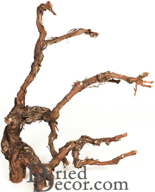 Grapewood Branches - Natural - Grape Wood - Click Image to Close