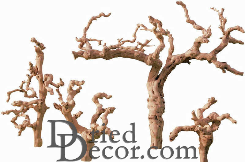 birch by branches decor decorative natural items