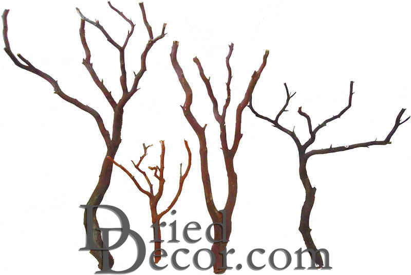 Natural Manzanita Bird Perches - Trees - Click Image to Close