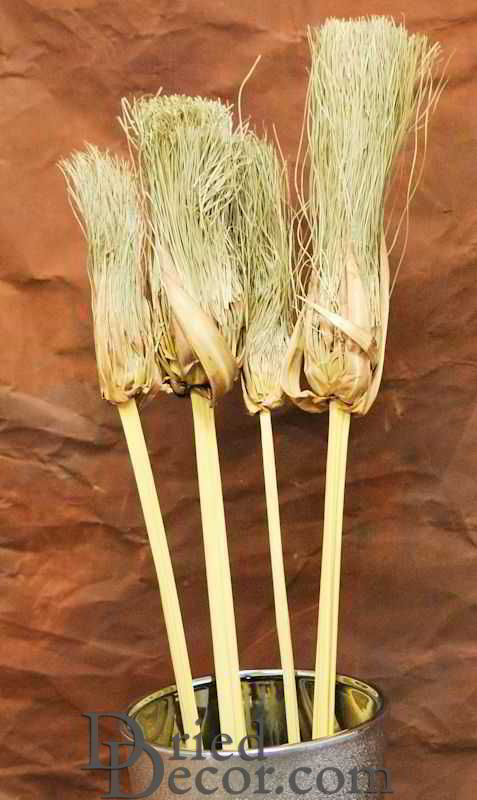 Dried Papyrus Brush Branches - Click Image to Close