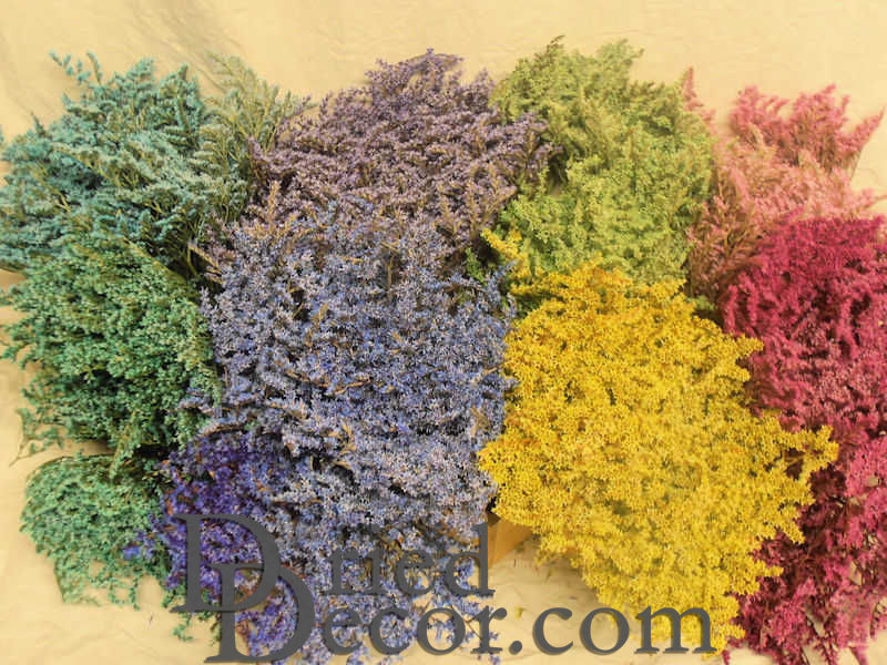Dyed german statice colored german statice larger image mightylinksfo