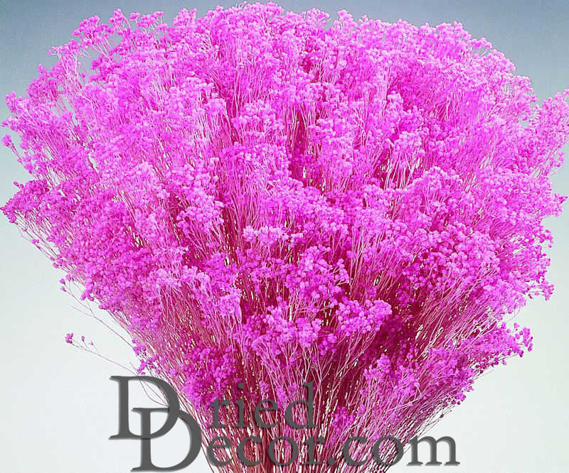 Dried babys breath colors dried gypsophila for sale larger image mightylinksfo
