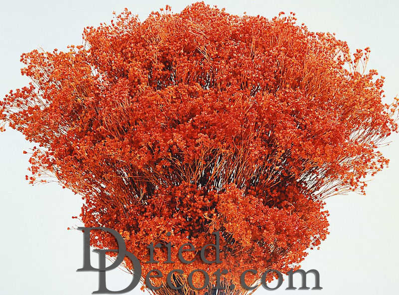 Dried Broom Bloom Flowers - Colors - Click Image to Close