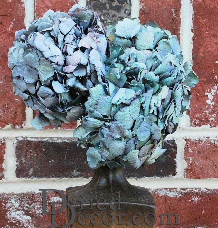 Dried Hydrangea Flower Bunch - Blue Color - Click Image to Close