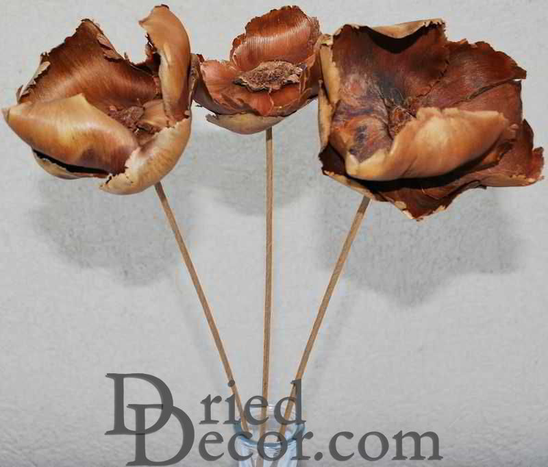 Dried Palm Blut Bunch - Palm Caps - Click Image to Close