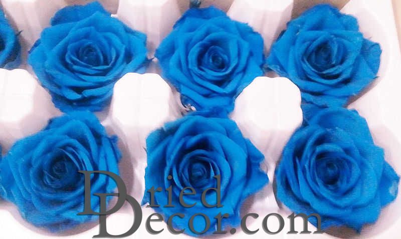 Preserved Roses - 8 per Order - Colors: Green, Blue, Black - Click Image to Close
