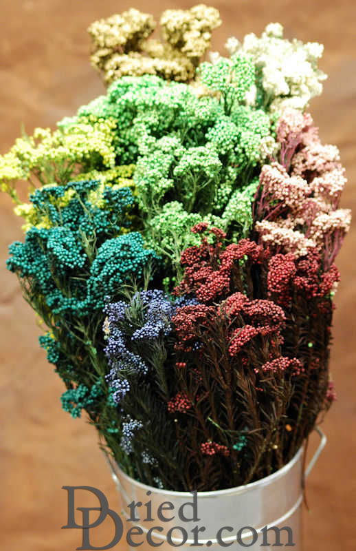 Dried Rice Flower Bunch - Click Image to Close